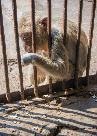 Monkeys hanging out in the shade outside the temple