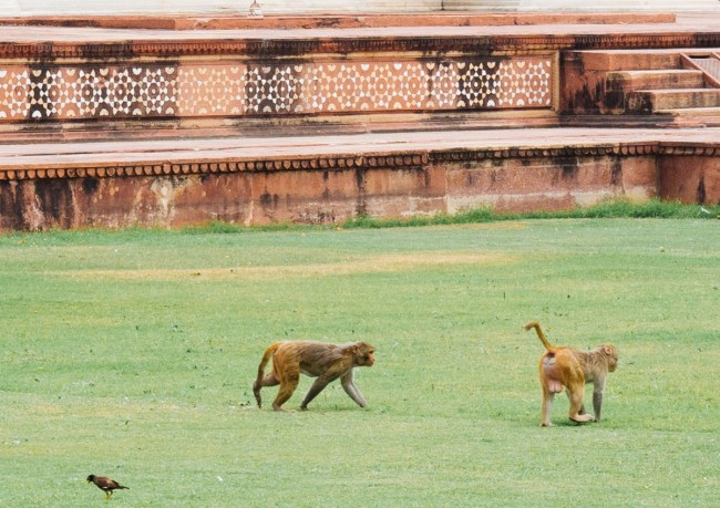 Monkeys on the Tomb Grounds