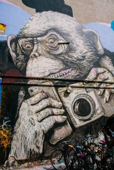 Monkey and Camera